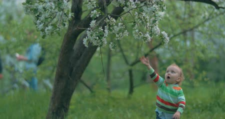 experiência : Little boy playing in the park or garden. He likes the apple-tree flowers so he trying to get some. Outdoor activity