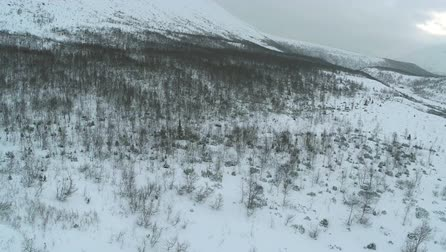 snowfield : Winter landscape in mountains. Smooth snowy hill slope with bare and evergreen trees. Mountain panorama in the distance, aerial view