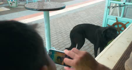 dog pound : Man using smart phone to make photo of a black stray dog in the street Stock Footage