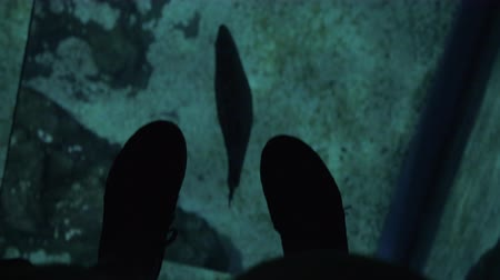 seaquarium : View to the feet on glass floor of oceanarium and swimming sea animal underneath
