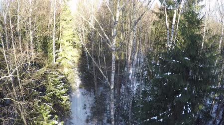orta hava : Copter rising and displaying aerial panorama of winter wood with bare birches and spruce trees