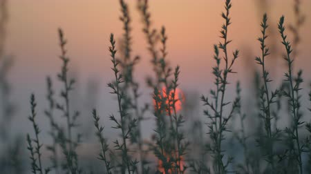 алый : Red sun going down over the water, view through the grass. Quiet nature scene in the evening Стоковые видеозаписи