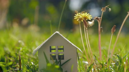 valódi : Concept of eco home and living in the countryside. House model on green lawn and bee on dandelion