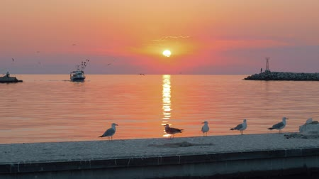 quiet evening : Slow motion shot of boat sailing quiet sea at sunset, seagulls flying over water and walking on the pier in foreground Stock Footage