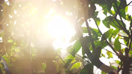 speck : Wet tree branches and green leaves in the sun light with specks Stock Footage