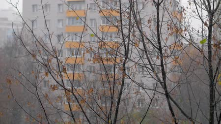 fade in : Slow motion shot of light snow falling. View to the tree with few dry leaves and apartment block in background