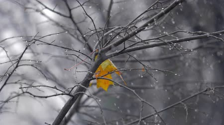 donuk : Slow motion shot of light snow falling outside. Bare tree with the only yellow leaf left and water drops on the branches. Dull grey autumn Stok Video