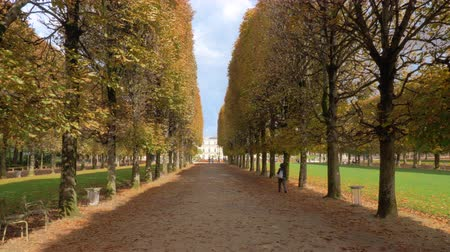 forrado : Walking along the promenade in Luxembourg Gardens. Autumn scene with high yellow wayside trees and foliage on the ground. Paris, France
