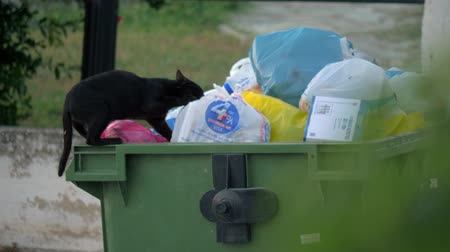 ищу : NEA KALLIKRATIA, GREECE - AUGUST 12, 2017: Stray black cat getting some food after search among the garbage in full trash