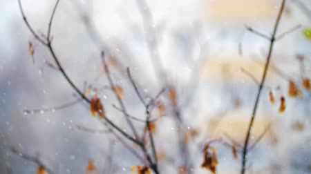 donuk : Slow motion shot of light snow falling on the background of faded autumn tree. Winter is coming Stok Video