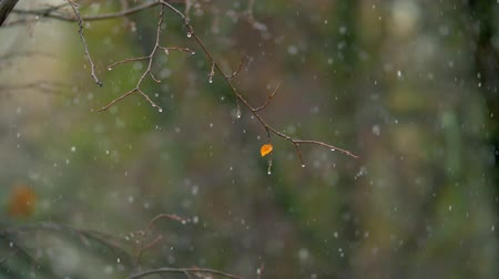 geçen : Slow motion shot of bare tree with last small leaf under the snowfall. Scene of late autumn Stok Video