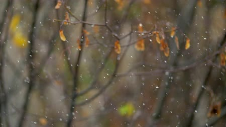 donuk : Slow motion shot of first snow falling, bare tree in background. Cold day of late autumn
