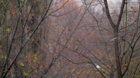 donuk : Slow motion shot of light snow falling in the park with bare trees. Late autumn scene Stok Video