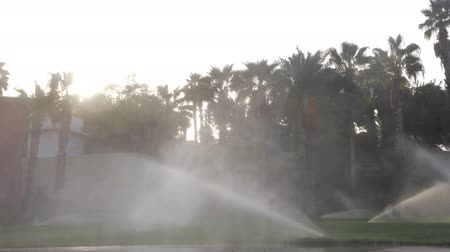 konewka : Slow motion of some irrigation sprinklers that are working on a lawn near some hotel. They are intensively watering green grass in different directions. Behind them part of a hotel building can be seen as well as many tall palm trees. The sky is bright an