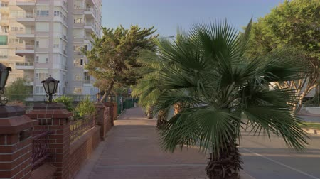 çare : Steadicam shot of walking on paved roadside sidewalk lined with green palms in Antalya, Turkey Stok Video