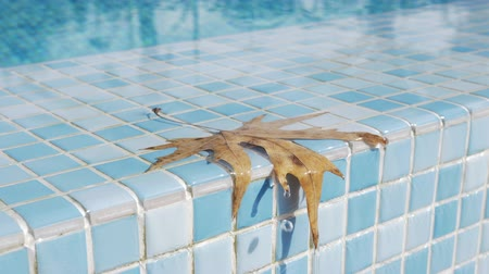 境界 : A closeup of a wet old leaf on a swimming pool boundary. It is lying on glazed shiny blue tiles and a clean water is quickly dropping from it 動画素材