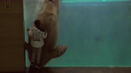 Young boy watching a manatee swim in his tank at an aquarium 影像素材