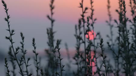 escarlate : Evening scene with red sun over the lake and grass in foreground Stock Footage