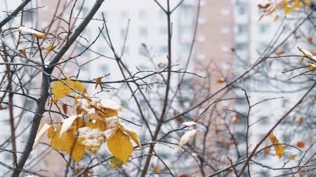 Winter coming to the city. Bare tree branches with few leaves covered with snow, apartment house in background