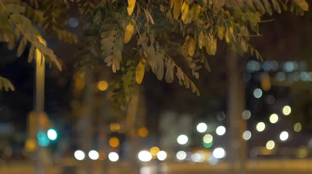 defocus : Night view of the city with moving defocused lights of transport, tree branches in foreground. Stock Footage