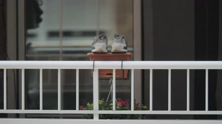 промывали : Kid trainers on the flowerpot on the balcony to dry in the sun. Home video imitation