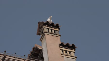 autentico : A slow motion of a white seagull sitting on an old Venice tiled chimney. The seagull is opening its yellow beak and looking around. The sky above it is clear and blue