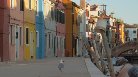 gaivota : A paved embankment of italian Burano and colorful facades of small buildings along it. There is a stone bridge on the background, green tree crowns here and there. A seagull on a foreground is eating a piece of food, then walking away and flying to anothe Stock Footage