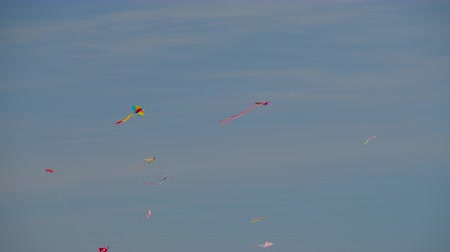 felhőtlen : A flock of multicolor kites floating high in the clear blue sky