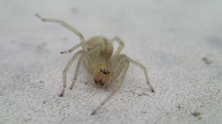 spinnen : Spider on a wall