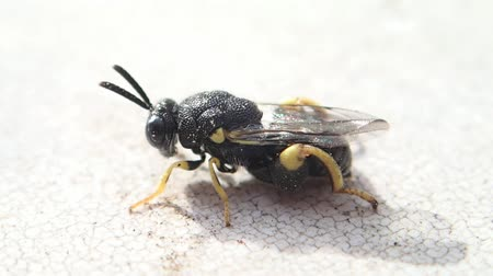 artrópode : Little black insect with yellow legs