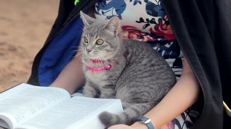 kum saati : Woman reading a book with gray kitten on the beach