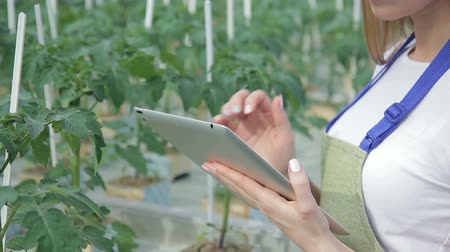 függőleges : Woman writes information about tomatoes in tablet closeup. Farmer female stands in greenhouse