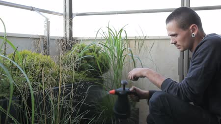 squatting : Young man sprinkles green plants with sprayer at home indoor. Male is squatting, holding spray gun and irrigation verdant plant abundantly with clean water, growing in black box. Brunet dressed in black clothes with big chain around neck, carefully cares  Stock Footage
