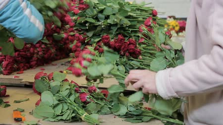 virágárus : Young women is forming bouquets of red roses in flower shop. Employees gather fresh flowers in compositions on table in store indoors. They work diligently at desk on which lie blossoms with scarlet buds, green leaves and stems. Working process is in brig Stock mozgókép