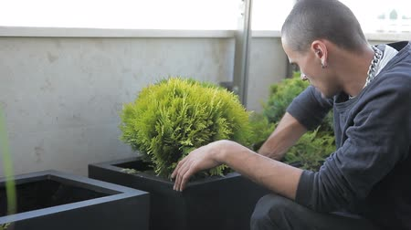 посылка : Young man is planting green plant in box in greenhouse indoor. He puts verdant fluffy seedling in black wooden box and presses with hands carefully. Experienced employee dressed in black clothes with metal accessories in ear and nose, cares neatly for lit