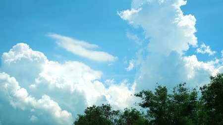 roll up : blue sky white cloud moving over back top tree time lapse Stock Footage