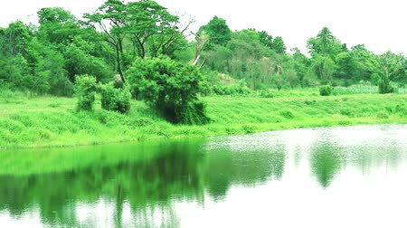 ot : lake in country side reflection of tree plant grass on water surface Stok Video