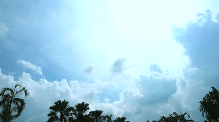 olhando para cima : white cloud move by wind on blue sky over top palm time lapse