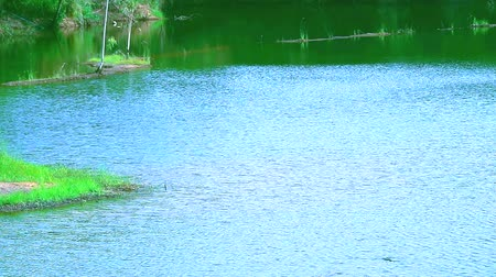 à beira do lago : green grass all around lake and wave on water surface Stock Footage