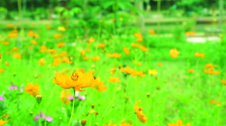 marigolds : orange flower blooming in gaden