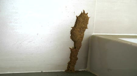 раковина : Termites make a nest beside the sink to eat furniture1