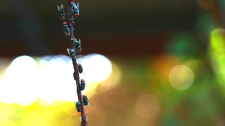 spousta : Many flies are sticking on dry branches tree and blur color background