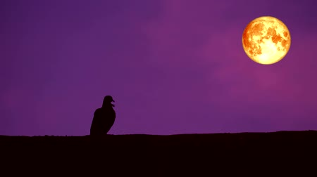 perigee : full blood moon and silhouette bird on top wall