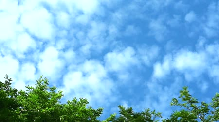 проходить : blue sky with pure with cloud move pass green top tree Стоковые видеозаписи