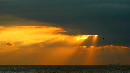 portador : god bless sunlight sunset back on orange cloud on sea and birds flying come back home