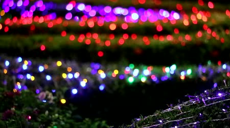 luces de la ciudad : multi color blur light decoration in night garden area1
