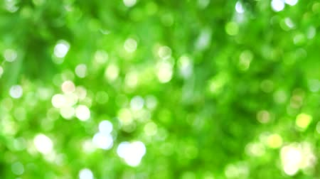 magenta flowers : light fresh green blur background abstract colorful leaves flower tree in garden Stock Footage