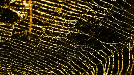 pók : blurred gold of rain drop on spider web and move by wind