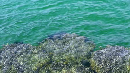 csibész : surf The crystal clear water until you see rocks and sea urchin