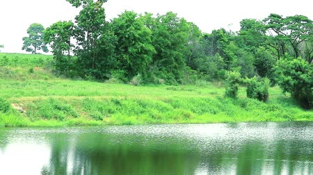 ot : pan to lake in country side and reflection of tree plant grass on water surface